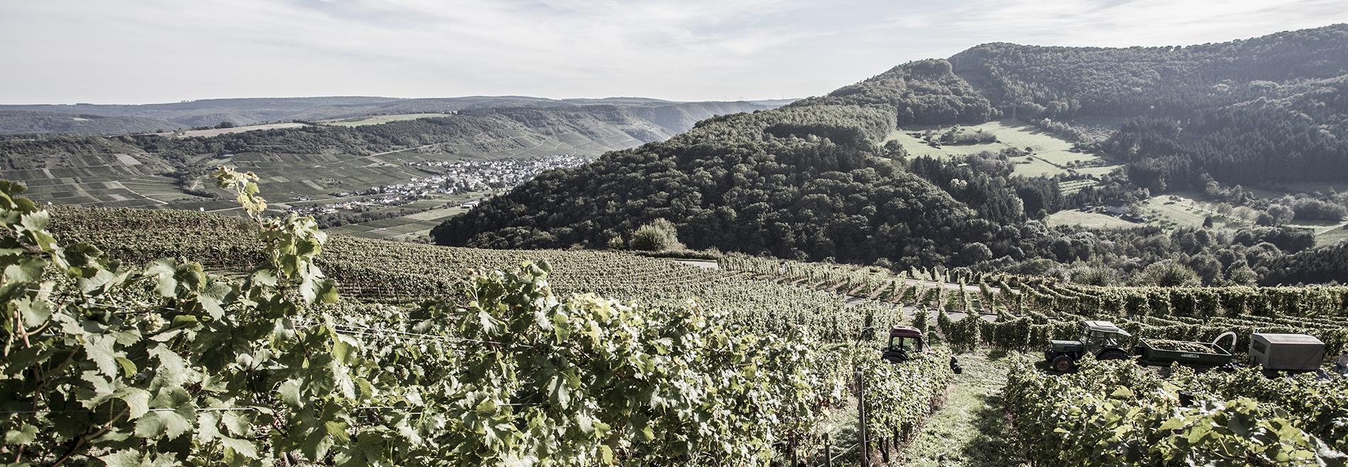 Der Blick von oben ins Moseltal über die reichlich bestellten Weinberge auf die gegenüberliegenden Hügel